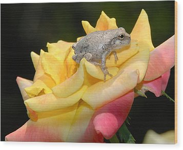 Frog Meets Rose Wood Print by Kathy Gibbons