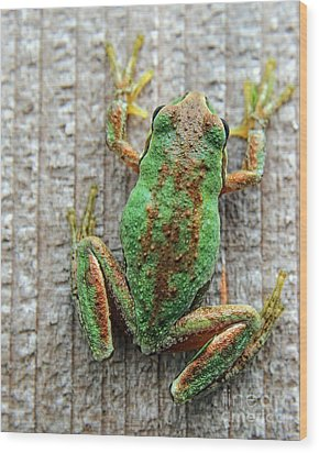 Frog On Wall Wood Print by Billie-Jo Miller