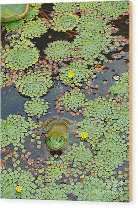 Wood Print featuring the photograph Frog Pond by Jeanne  Woods