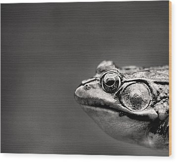 Frog Portrait Wood Print by Cappi Thompson