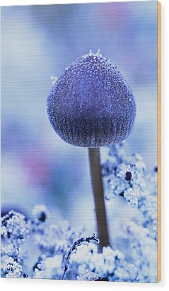 Frost Covered Mushroom, North Canol Wood Print by Robert Postma