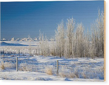 Frost-covered Trees In Snowy Field Wood Print by Michael Interisano