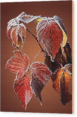 Wood Print featuring the photograph Frosted Leaves by Judy  Johnson