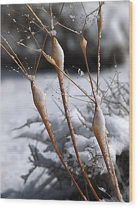 Frosted Trumpets Wood Print by Joe Schofield