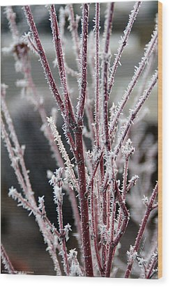 Wood Print featuring the photograph Frosty Coral Maple by Mick Anderson