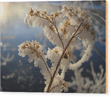 Frosty Dry Wood Aster Wood Print