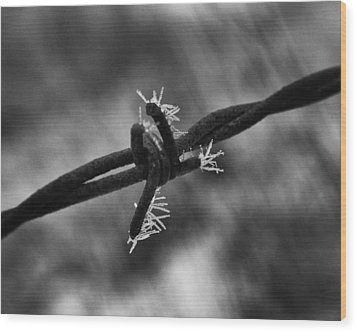 Wood Print featuring the photograph Frosty Thorn by Coby Cooper