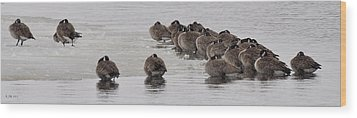 Wood Print featuring the photograph Frozen Flock by Kevin Munro