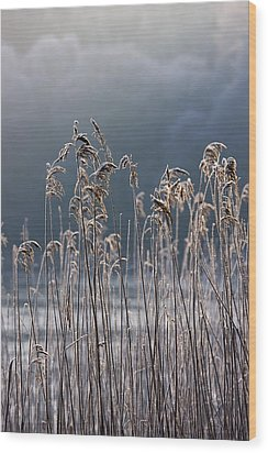 Frozen Reeds At The Shore Of A Lake Wood Print by John Short