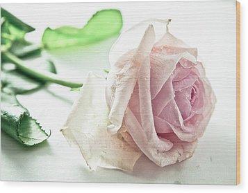 Frozen Rose Wood Print by Dm909
