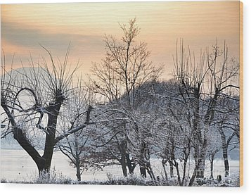 Frozen Trees Wood Print by Mats Silvan