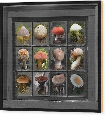 Fungus By Windowlight Wood Print