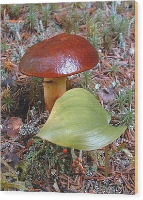 Fungus The Tapering Russula  Latin Name - Russula Saguinea Wood Print