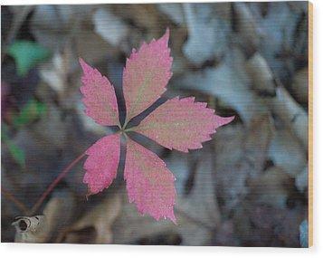 Fushia Leaf 2 Wood Print by Douglas Barnett