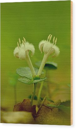 Wood Print featuring the photograph Fuzzy Blooms by JD Grimes