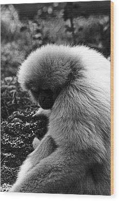 Fuzzy Monkey Wood Print
