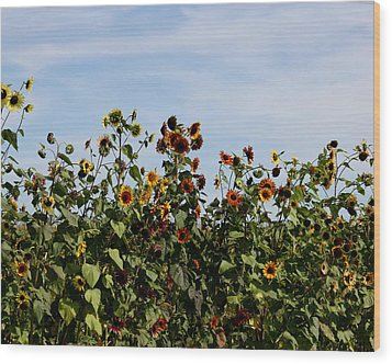 Wood Print featuring the photograph Gaillardia On Parade by Penny Hunt
