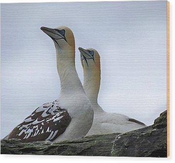 Wood Print featuring the photograph Gannets by Lynn Bolt