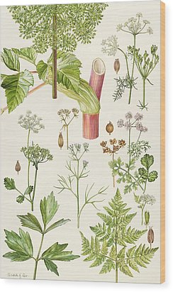 Garden Angelica And Other Plants  Wood Print by Elizabeth Rice