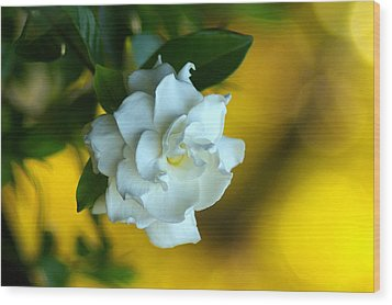 Wood Print featuring the photograph Gardenia by Brian Wright