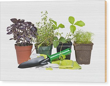 Gardening Tools And Plants Wood Print by Elena Elisseeva
