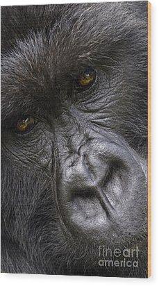 Wood Print featuring the photograph Garunda The Gorilla - Rwanda by Craig Lovell