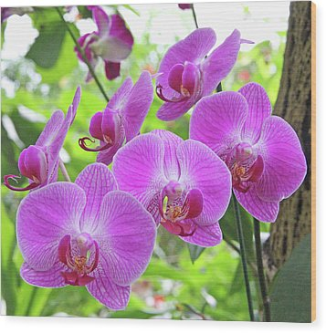 Gathering Of Orchids Wood Print by Becky Lodes