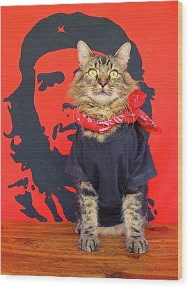Wood Print featuring the photograph Gato Guevara by Joann Biondi