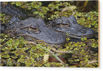 Gator Babies Wood Print by Andres Leon