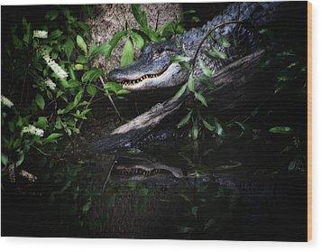 Gator Reflect Wood Print by Karol Livote