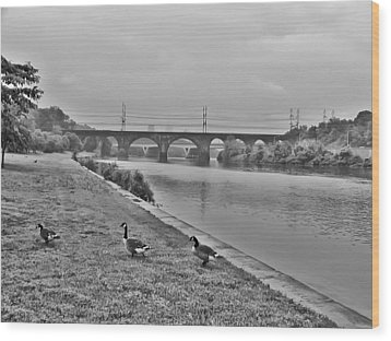 Geese Along The Schuylkill River Wood Print by Bill Cannon