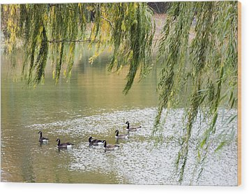Geese In Central Park Wood Print by Stacy Gold