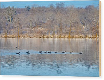 Geese In The Schuylkill River Wood Print by Bill Cannon