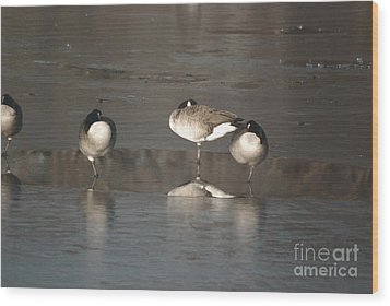 Wood Print featuring the photograph Geese On One Leg by Mark McReynolds