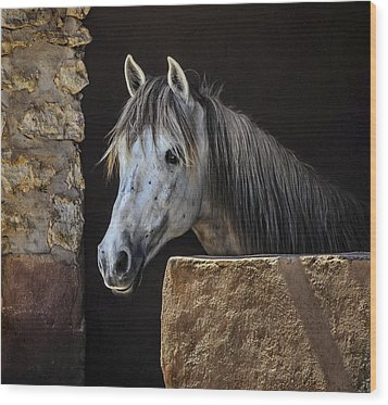 Gentle Beauty In Morocco Wood Print by Marion McCristall