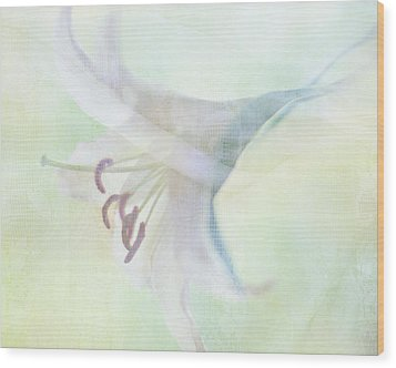 Gentle Lily Wood Print by Sharon Lapkin