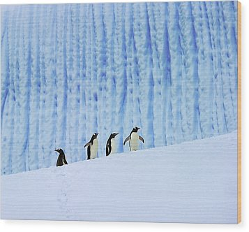 Gentoos On Ice Wood Print by Tony Beck