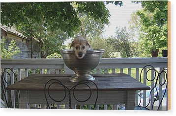 George In A Bowl Wood Print by Mark Haley