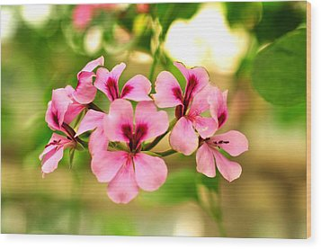 Wood Print featuring the photograph Geranium  by Puzzles Shum