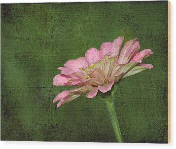 Wood Print featuring the photograph Gerber Daisy by Sami Martin