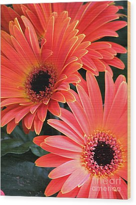 Gerbera Bliss Wood Print by Rory Sagner