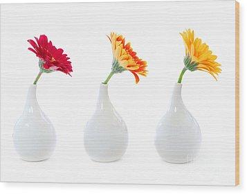 Gerbera Flowers In Vases Wood Print by Elena Elisseeva