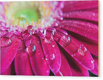 Gerbera Rain Droplets Wood Print by Michelle McMahon