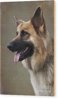 German Shepherd Dog Wood Print by Ethiriel  Photography