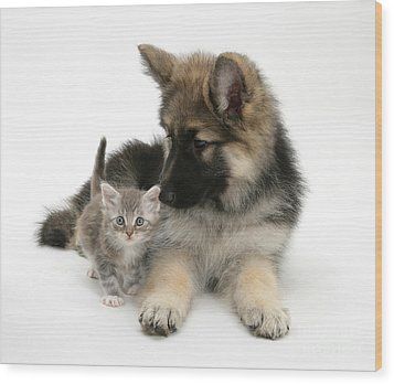 German Shepherd Dog Pup With A Tabby Wood Print by Mark Taylor