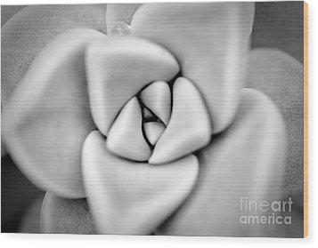 Ghost Petals Wood Print by Pixel Perfect by Michael Moore