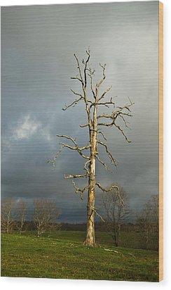 Ghost Tree Wood Print by Douglas Barnett
