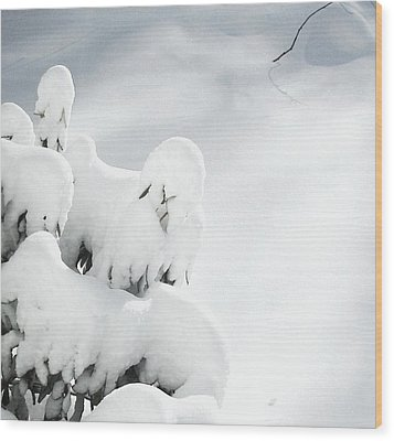 Wood Print featuring the photograph Ghostly Snow Covered Bush by Pamela Hyde Wilson