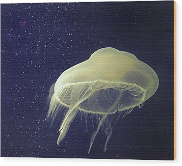 Giant Jelly Fish With Eggs That Look Like Stars Wood Print by Pete Foley