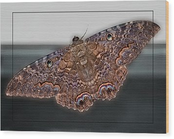 Wood Print featuring the photograph Giant Moth by DigiArt Diaries by Vicky B Fuller